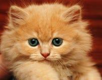 den fluffiga kattungen tystar ned litet Royaltyfria Bilder