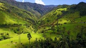Den flyg- sikten av den Cocora dalen och dess vax gömma i handflatan skogen Colombia lager videofilmer
