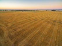 Den flyg- sikten av det skördade fältet och gräsplan betar på solnedgången i Au Arkivbild