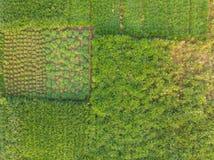 Den flyg- sikten av ett grönt betar land för de mjölka korna av en stor nötkreaturlantgård i lantliga Indien arkivbilder