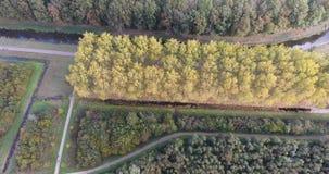 Den flyg- sikten av färgrika träd för hösten i parkerar, Nederländerna lager videofilmer