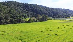 Den flyg- sikten av gröna ris terrasserar fältet i Chiang Mai, Thailand arkivbild