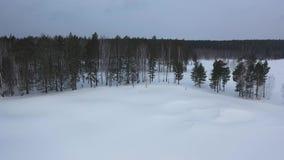 Den flyg- sikten av idrottsman nendeltagandet i skidar konkurrens, och spring på skidar spåret nära skogen i vinter footage stock video