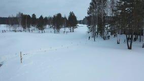 Den flyg- sikten av idrottsman nendeltagandet i skidar konkurrens, och spring p? skidar sp?ret n?ra skogen i vinter footage lager videofilmer