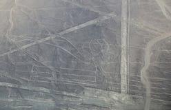 Den flyg- sikten av Nazca linjer - mekaniskt säga efter geoglyph, Peru Arkivfoto