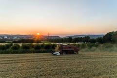 Den flyg- sikten av skördetröskan som skördar havre, kantjusterar på solnedgången Fotografering för Bildbyråer