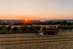 Den flyg- sikten av skördetröskan som skördar havre, kantjusterar på solnedgången Royaltyfri Foto