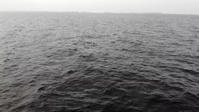 Den flyg- sikten av surret går på havet/filmisk filmIntro stock video
