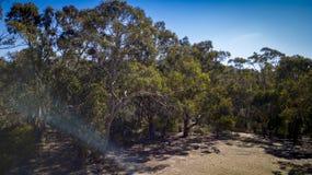 Den flyg- sikten av träd och granit vaggar i Stanthorpe, Australien Fotografering för Bildbyråer