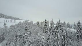 Den flyg- sikten av vinterberg som täckas med, sörjer träd Lågt flyg över snöig prydlig skogskönhet av djurliv på lager videofilmer