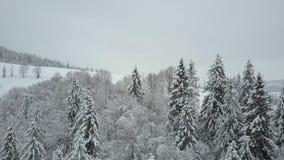 Den flyg- sikten av vinterberg som täckas med, sörjer träd Lågt flyg över snöig prydlig skogskönhet av djurliv på arkivfilmer