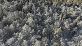 Den flyg- sikten av vinterskogen flyger över djupfryst snöig gran och sörjer lager videofilmer