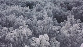 Den flyg- sikten av vinterskogen flyger över djupfryst snöig gran och sörjer stock video