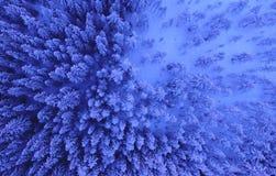 Den flyg- sikten eller den bästa sikten av vinterskogen, sörjer trädet med täckt snö vinter för blåa snowflakes för bakgrund vit royaltyfri bild