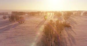 Den flyg- surrsikten av det kalla vinterlandskapet med det arktiska fältet, träd täckte med strålar för solen för frostsnö och mo stock video