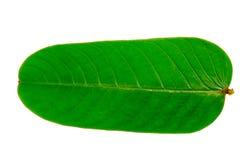 Den fodrade modellen i sidor av gräsplan Arkivfoto