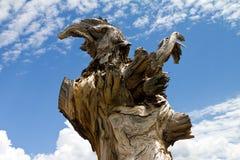 Den formade örnen vred den gammala Treestubben Arkivbild