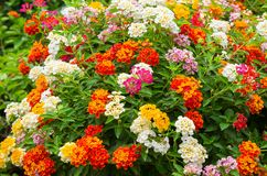 Den formella trädgården, den dekorativa trädgården, blomsterrabatten, vår som är offentlig parkerar arkivbild