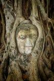 Den forntida Buddha som flätas ihop inom träd, rotar i Thailand Arkivbild