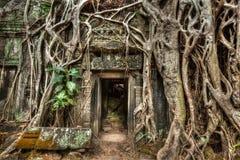 Den forntida det stendörren och trädet rotar, templet för Ta Prohm, Angkor, Camb Fotografering för Bildbyråer