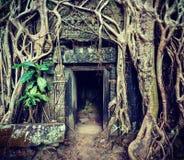 Den forntida det stendörren och trädet rotar, templet för Ta Prohm, Angkor, Camb Arkivfoto