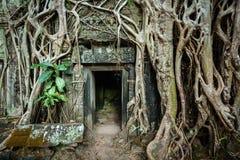 Den forntida det stendörren och trädet rotar, templet för Ta Prohm, Angkor, Camb Arkivfoton