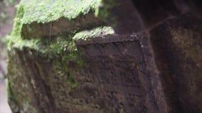 Den forntida gravstenplattan nära buddhaen särar i lös skog i djungel Platta` s som specificerar den red ut yttersidan med stock video