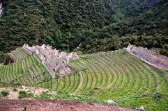 den forntida incaen fördärvar Arkivbilder