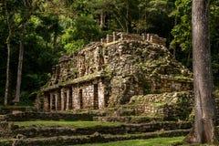 Den forntida Mayan byggnaden i Yaxchilan Royaltyfria Foton