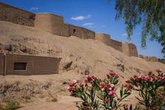 Den forntida staden av Bam i söderna av Iran och blommor royaltyfri bild