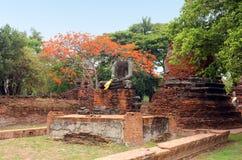 Den forntida statyn av Buddha fördärvar in, inom en gammal tempel ayutthaya thailand royaltyfri foto