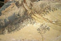 Den fossiliserade växten lämnar closeupen på stenen Royaltyfri Bild