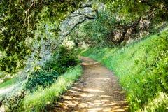 Den fotvandra slingan till och med skogarna av det Edgewood länet parkerar, San Francisco Bay område, Kalifornien royaltyfri fotografi