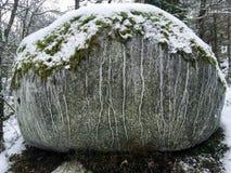 Den främre sikten av ett stort stenar vaggar i vinterskogsnö och mossa överst och ismodellbildande arkivbild