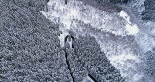 Den framåt flyg- bästa sikten över hårnålskurvavändvägen i täckt vinterforestWhite för berg snö sörjer trädträn snöig arkivfilmer