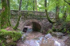 Den Frankrike Savoie skogen går Arkivfoto