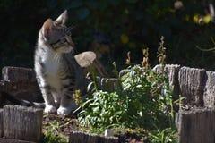 Den Freya kattungen poserar bredvid spenderade plötsliga drakar som markerar sommarslutet arkivfoto