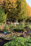 Den färgrika höstträdgården shoppar Royaltyfria Bilder