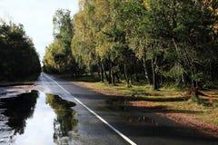 Öde väg i skogen efter regna Royaltyfria Bilder