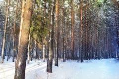 Den fridsamma skogen i vinter Royaltyfri Bild