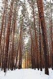 Den fridsamma skogen i vinter royaltyfri fotografi