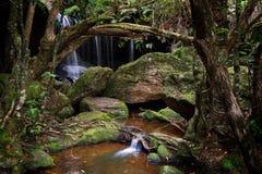Den frodiga grottan på Fitzory faller Australien Royaltyfria Foton