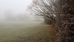 Den frostiga dimmamorgonen parkerar in Royaltyfri Foto