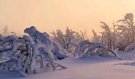 Den frostiga handen av vintern arkivbilder
