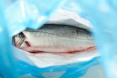 Den förstörda seabasfisken shoppar in marknadspåsen Royaltyfri Fotografi