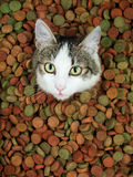 Den förtjusande katten med henne spontar ut Arkivbild