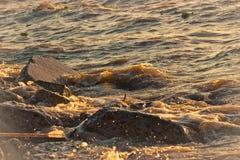 den fryste exponeringen betyder plaska vatten för rörelse Royaltyfri Foto