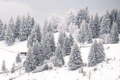 Den fryste vinterskogen sörjer träd i December fotografering för bildbyråer