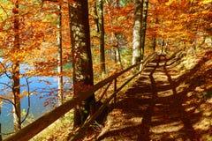 Den Fußweg wandernd, der mit gefallenem Herbstlaub bedeckt wird, nähern Sie sich blauem See Stockbilder