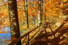Den Fußweg wandernd, der mit gefallenem Herbstlaub bedeckt wird, nähern Sie sich blauem See Stockbild